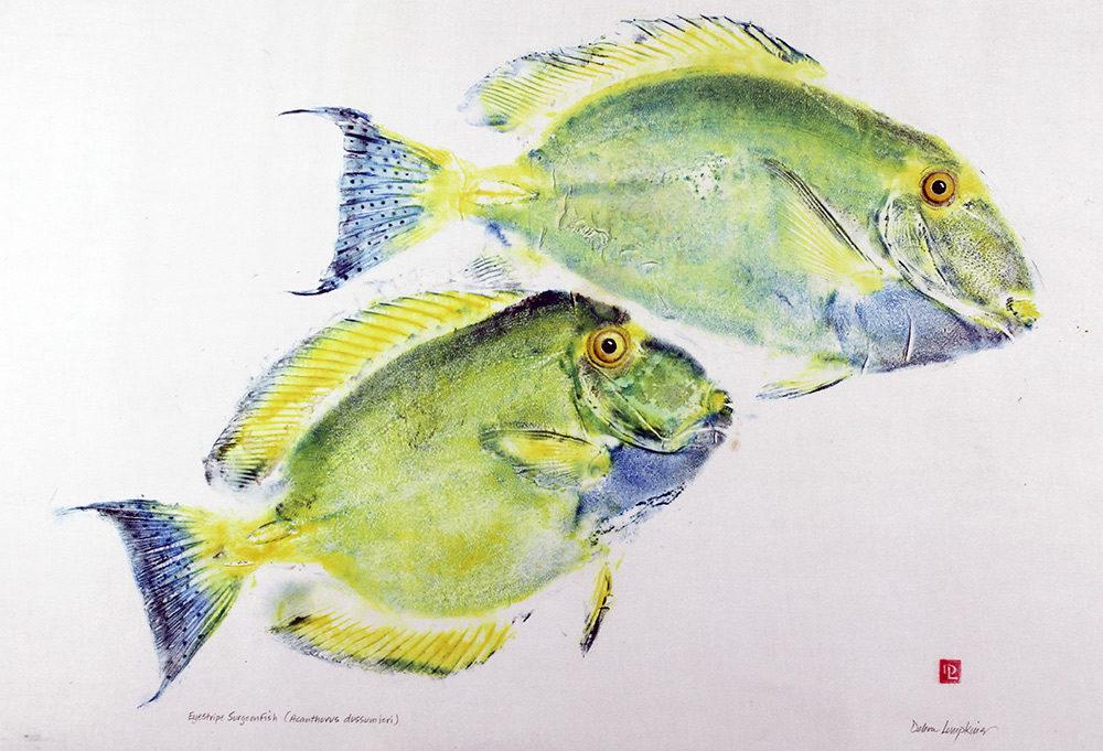Two Eyestripe Surgeonfish
