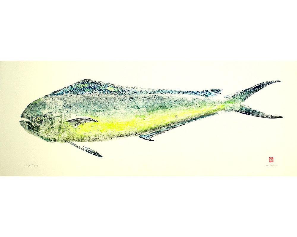 17052 Mahimahi gyotaku by Debra Lumpkins
